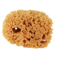 503192400 Purdy Symphony Natural Sea Sponge 503192400, 503192400 Symphony Natural Sea Sponge