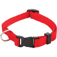 31401 Westminster Pet Puppy And Cat Collar cat collar